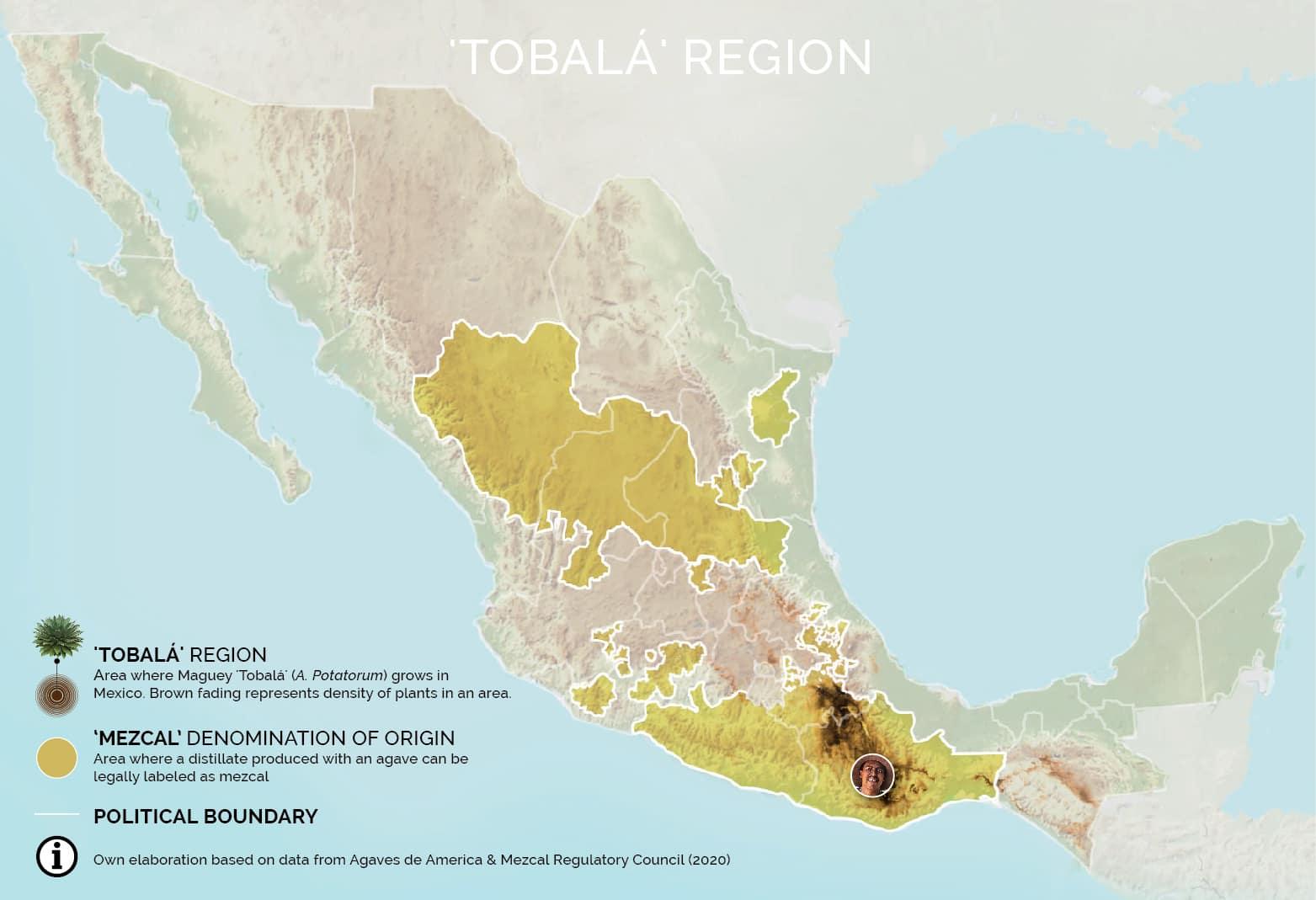 Maguey Región Tobalá